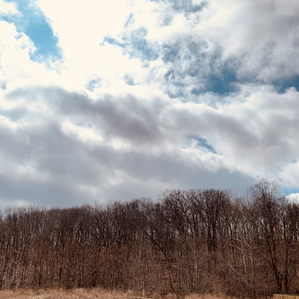 Picture of wooded landscape, trees without leaves, and a sunny but cloudy blue sky.